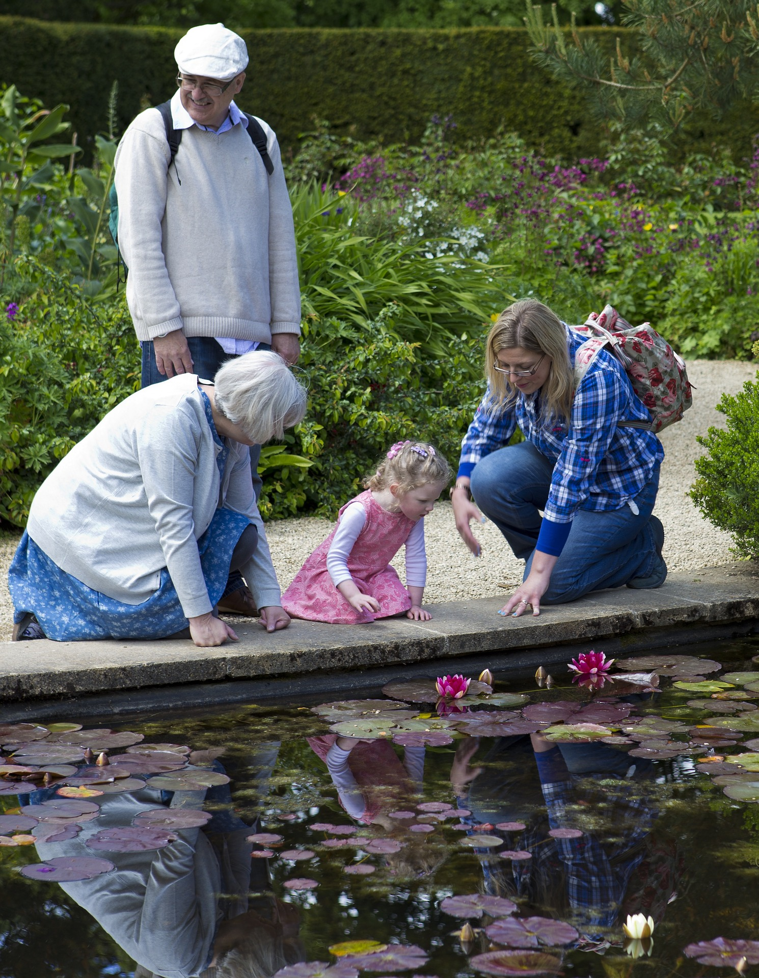 lilly-pond-805207_1920
