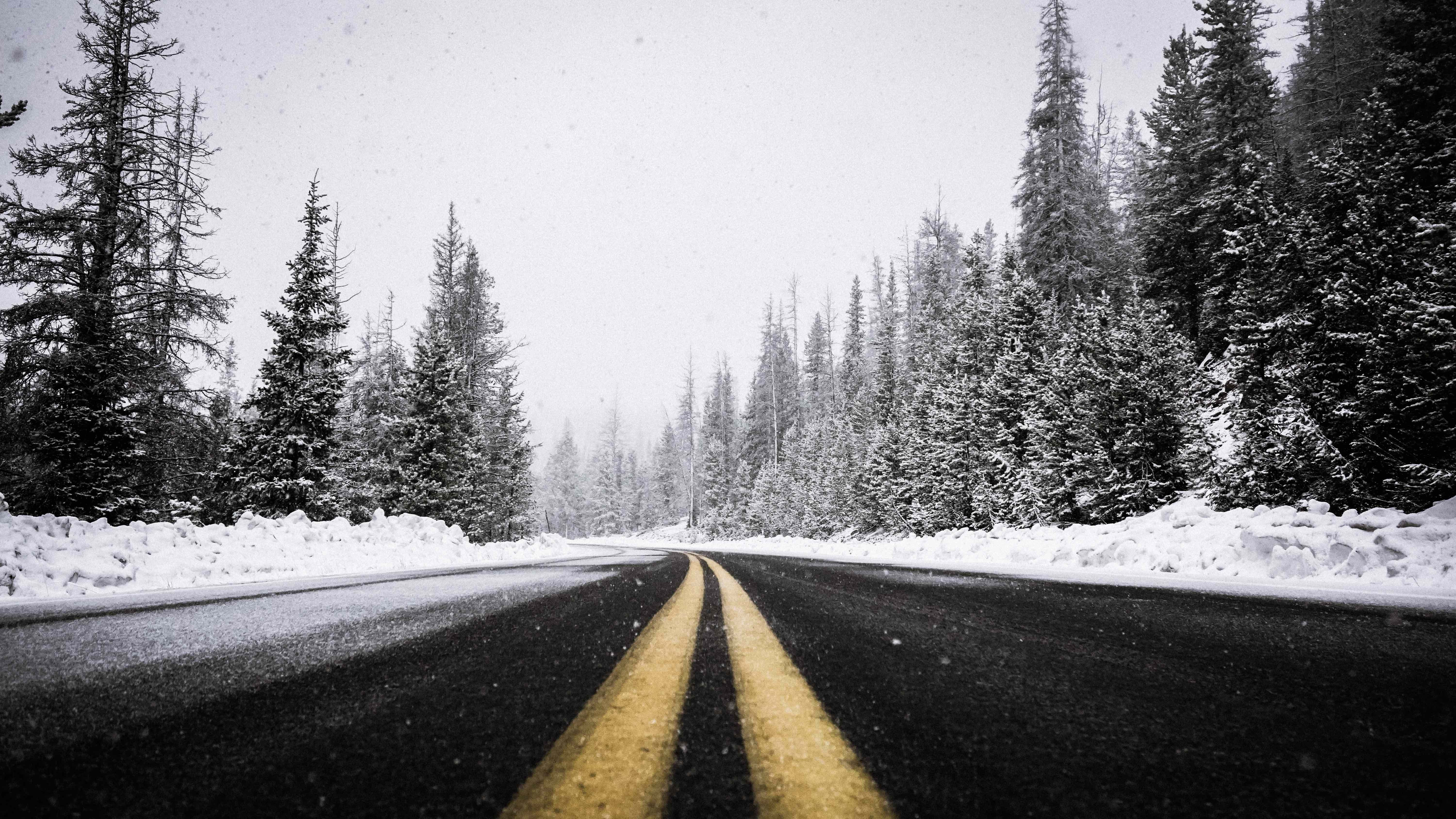 Photo of snowy road lined with trees
